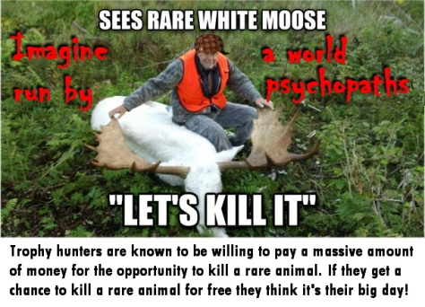 Trophy hunters - Stupidity sees rare white moose let's kill it