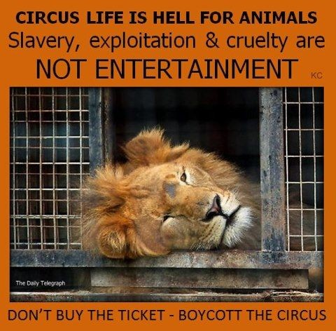 the circus life of an animal While we all enjoy the glitz, glitter and acrobatics of the circus, few of us think of  what circus life means to the animals elephants, tigers, bears, camels, zebras.