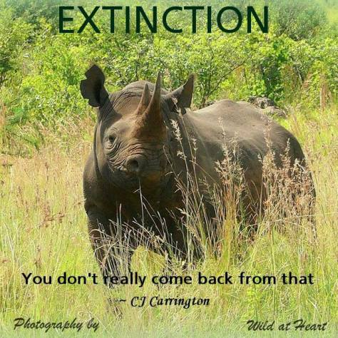 Message - Extinction rhino