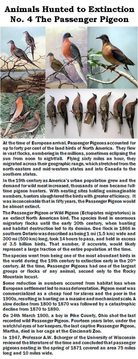 Trophy hunters - Extinction Passenger Pigeon