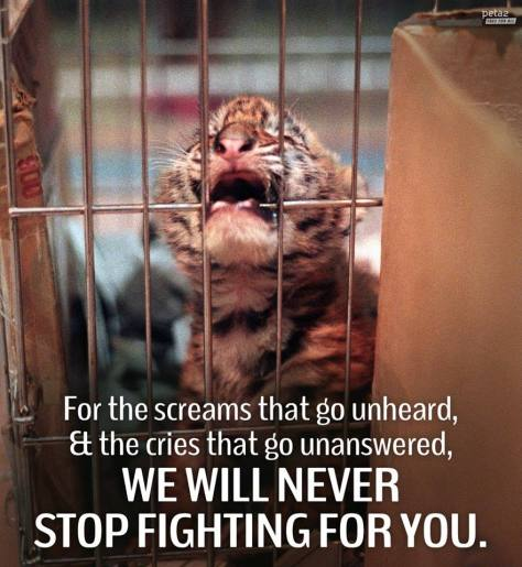Big cats - Tiger cub we will never stop fighting