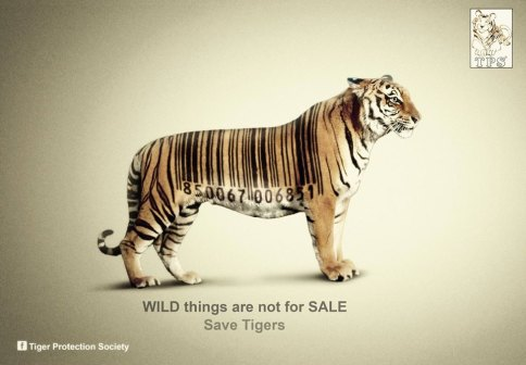 Big cats - Tigers are not for sale