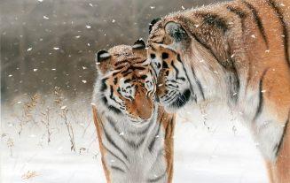 Big cats - Tigers Beautiful 18