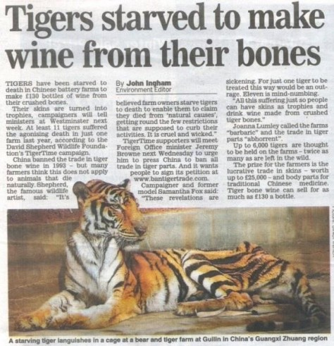 Big cats - Tigers started to make wine from their bones