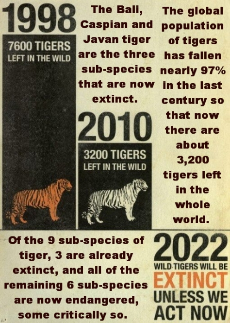 Big cats - Tigers stats