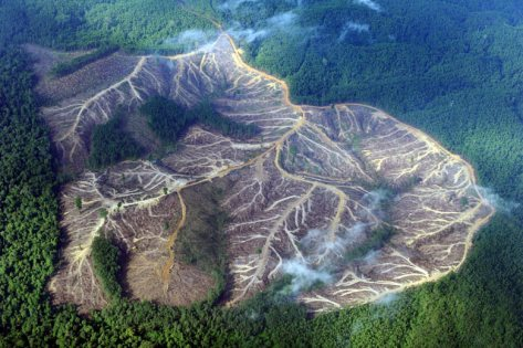 Deforestation and pollution - Palm oil companies 10