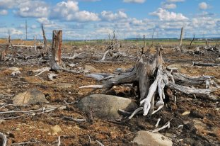 Deforestation and pollution - Palm oil companies 6