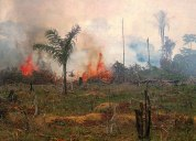 Deforestation and pollution - Palm oil companies 9