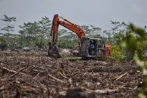 Environmental - Deforestation 01