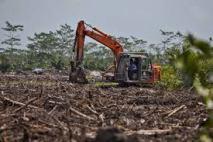 Environmental - Deforestation 01