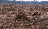 Environmental - Deforestation 02