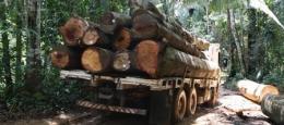 Environmental - Deforestation 03