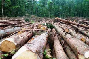 Environmental - Deforestation 04
