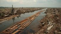 Environmental - Deforestation 05