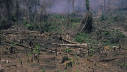 Environmental - Deforestation 09