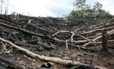 Environmental - Deforestation 09