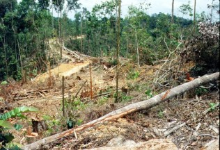 Environmental - Deforestation 11