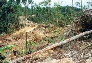 Environmental - Deforestation 11