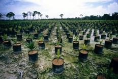 Environmental - Deforestation 12