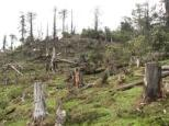 Environmental - Deforestation 12