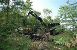 Environmental - Deforestation 13