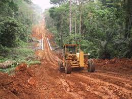 Environmental - Deforestation 15