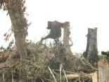 Environmental - Deforestation 17