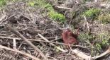 Environmental - Deforestation 18