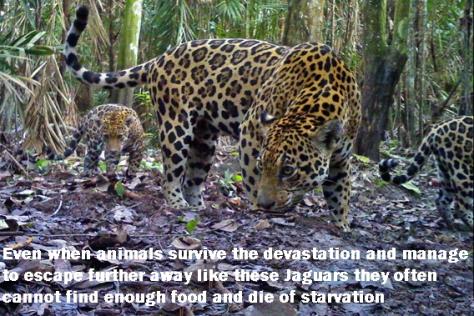 Environmental - Deforestation 22