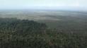 Environmental - Deforestation 25