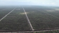 Environmental - Deforestation 26
