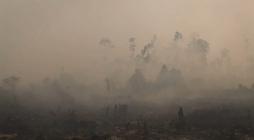 Environmental - Deforestation 27