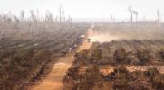 Environmental - Deforestation 29
