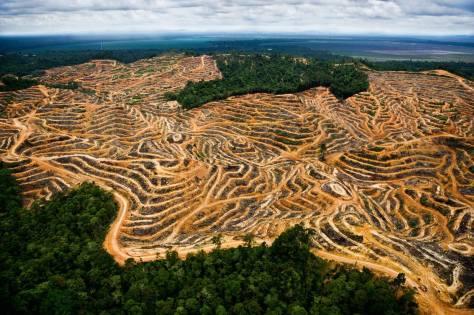 Environmental - Deforestation ADD 0