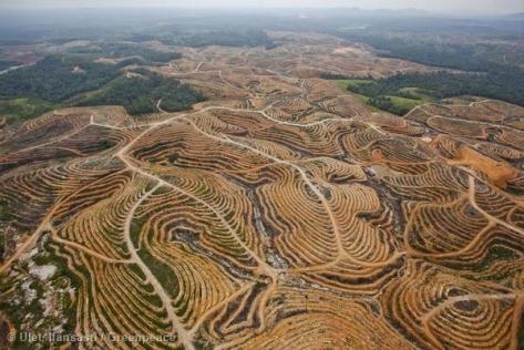 Environmental - Deforestation ADD 1