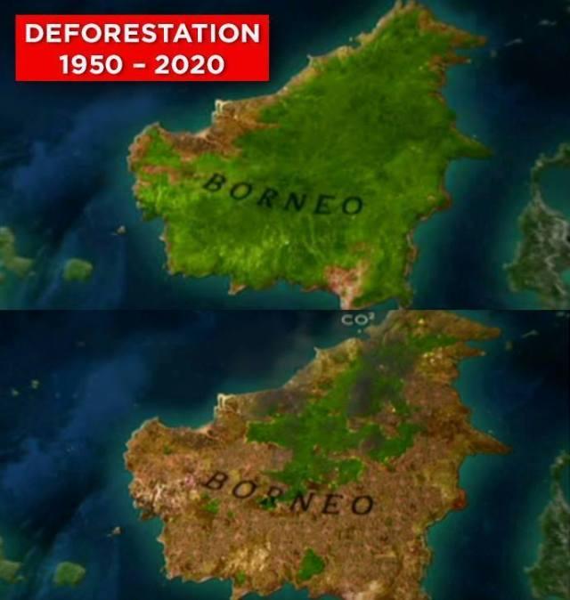 Environmental - Deforestation Borneo