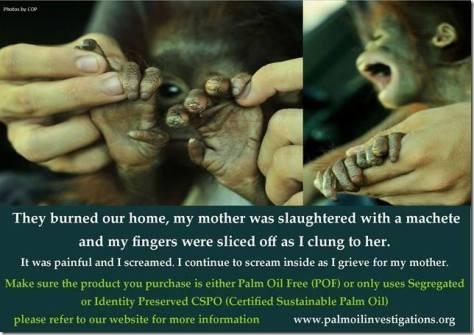 Environmental - Deforestation monkey they burned my home