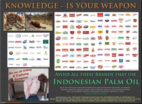 Environmental - Deforestation palm oil