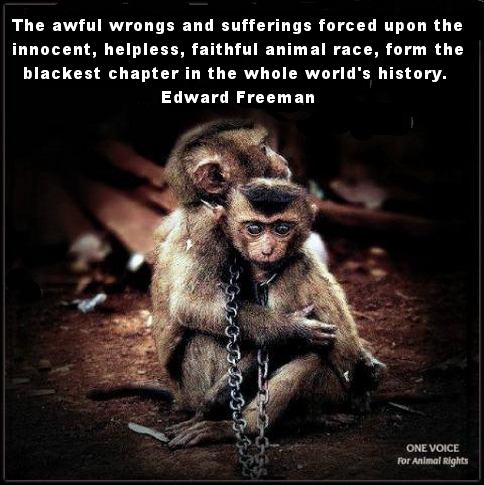 Environmental - Monkeys the wrongs and sufferings