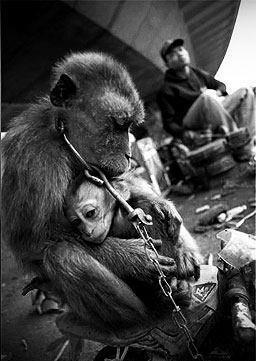 Gorillas 1