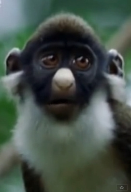Monkey - Add this