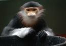 Monkeys 01