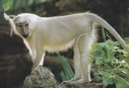 Monkeys 03
