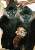 Monkeys 04