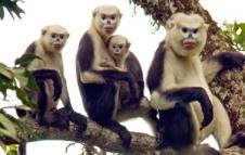 Monkeys 06