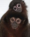Monkeys 09