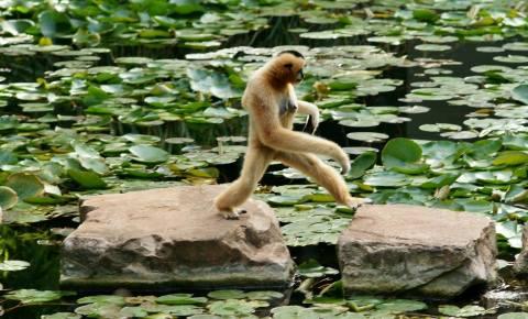 Monkeys 10