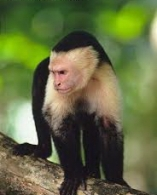 Monkeys 12