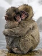 Monkeys - 13 7c56c8b06feb29e84d3f6b8301bd203e