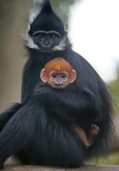Monkeys - 21 Monkeys - Types 24